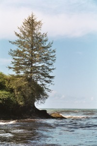 Lone Tree and Seaside