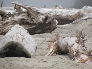 Beach logs on the beach near Mo's Restaurant in Linclon City.