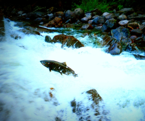 Fall Salmon Run 3, Eagle Creek, Oregon, 2002