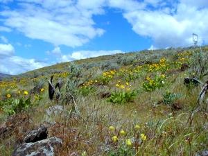 Balsam Flower Hillside, April 2002