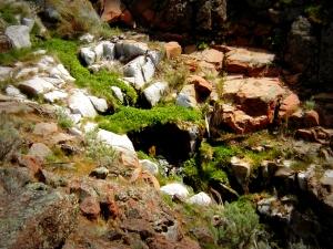 Hidden Spring Near Deschutes River Trail, April 2002