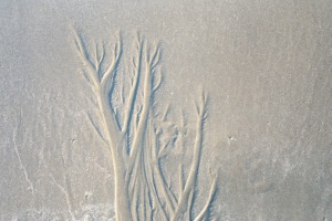 Natural Sand Sculpture on the Beach, June 2003