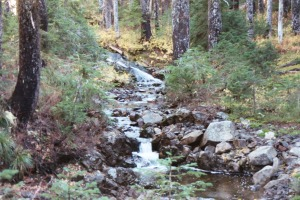 Indian Heaven Wilderness Stream, Summer 2002