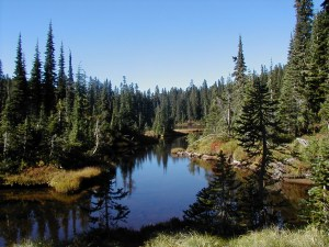 Indian Heaven Wilderness Trail, Fall 2001