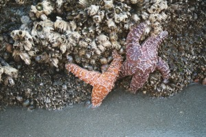 Orange and Purple Starfish, June 2003