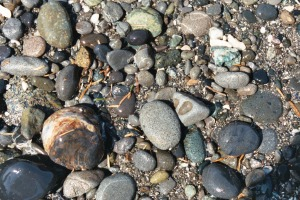 Pebbles on a Beach, June 2003