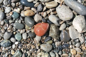 Heart-shaped Red Beach Pebble, June 2003
