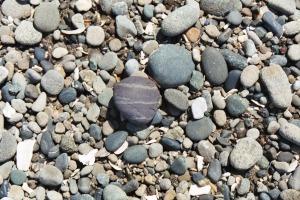 Beach Pebbles, June 2003