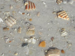 Broken Sea Shells, Panama City, Florida, February 2008