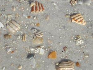 Broken Sea Shells, Panama City, Florida, February 2008