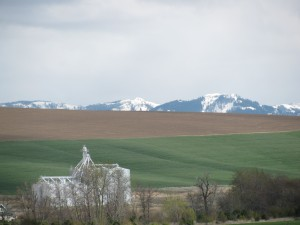 Snow in the Blue Mountains Over A Palouse Spring, April 2010