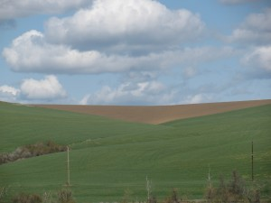 Spring in the Palouse, Washington, Spring 2010