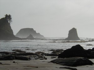 Olympic National Wilderness Area - Ozette Camp Area