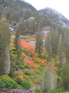 Fall Colors in the Mountains, Roslyn, Washington, September 2010