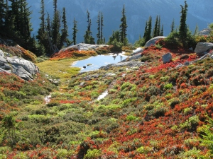 Fall Colors in Alpine Meadow, Granite Mountain, September 2010
