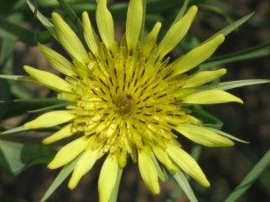 Yellow Flower from Tri-Cities, Wa
